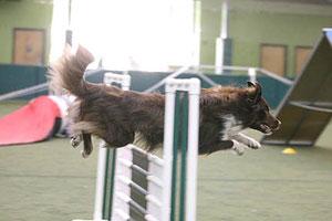 dance09-reddy-jumping-profile