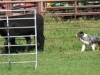 eli-cattle9-classic07_28_510