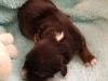 2nd black male, 1 week old