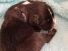 Black male, 1 week old