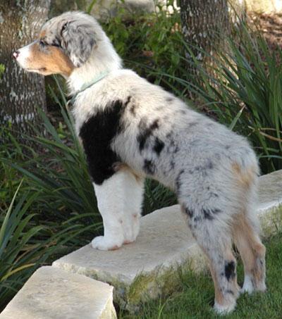 Luca 04-Ben-pup
