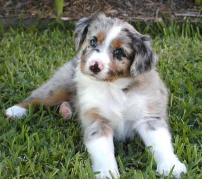 Luca 04-Jet-Sammy-pups