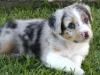 Luca 04-Addie-pup