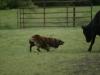 trip-sheep-2013b-jpg