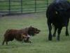 trip-w-cattle-2013a-jpg