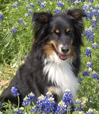Dance-bluebonnets-sit