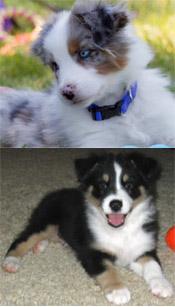 Winslow-Puppy-Toprock-1