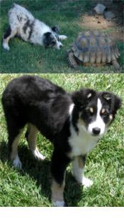 Winslow-Puppy-Toprock-2