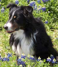 Winslow-bluebonnet-sit-ME