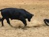 dance-2010finalswaco-richardbruner0646a