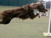dance09-reddy-agility-7l3g0955