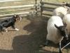 luca308-striker-sheep908