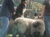 luca308-striker-sheepback-908