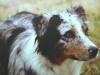 Luca 04-Addie-closeup