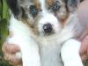 Luca 04-Eli-pup