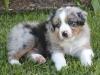 Luca 04-patch-Dutch-pup