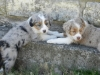7-week-old-blue-and-red-girls